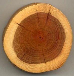 Сорт дерева